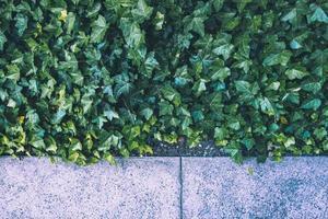 grüne Pflanzen mit Bürgersteig foto