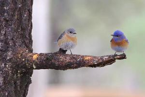 zwei Vögel auf einem Ast