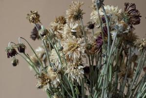 Strauß trockener Chrysanthemenblüten foto
