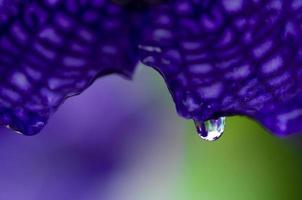 Wassertropfen auf Blume