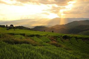 Reisterrassenfelderlandschaft auf dem Berg foto