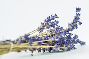 Nahaufnahmeblick von Lavendel auf weißem Hintergrund foto