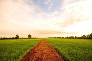 Reisfelder auf dem Land foto