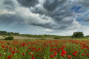 schöne ländliche Felder im Sommer