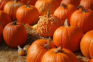 Kürbisbeethintergrund für Herbst, Herbst, Halloween, Erntedankfest, saisonale Anzeige. foto