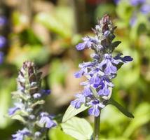blaues Signalhorn foto