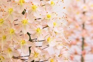 Zerbrechlichkeit rosa Blüten foto