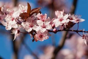 etwas über den Frühling