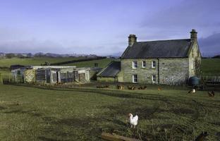 traditionelles Bauernhaus aus Stein, Hühner, Glaisdale, Yorkshire, Großbritannien.
