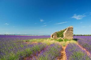 alte Ruine in Lavendelfeldern