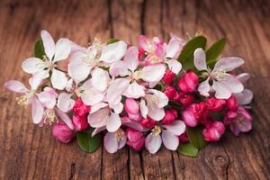 Apfelblütenblumen auf einem Weinlesehölzernhintergrund