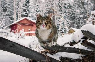die Katze und das Winterhaus. foto