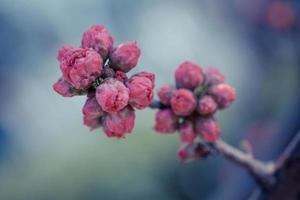 klassisches Porzellan - Frühling