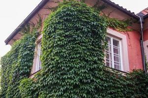 Ecke des Hauses Efeu gezwirnt