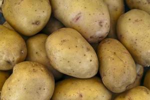 gelbe Kartoffeln foto