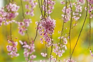 pinke Blume foto