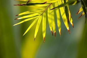 Bambusblätter.