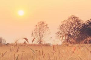 Ballen im Feld und Sonnenuntergang