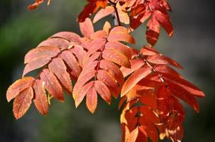 Zeit des Laubfalls - helle Blätter an Zweigen. foto