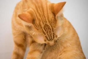 orange Katze in Haus 1