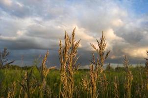 Gras, landwirtschaftliches Feld foto