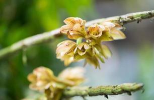 seltene hybride Orchideenblüte foto