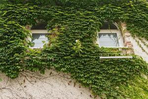 Blätter bedecken die Wand des Hauses