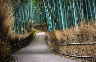 Kyotos Bambushain foto