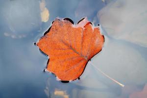 Herbstblatt auf Wasser foto
