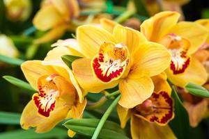 schöne Orchideenblüten.