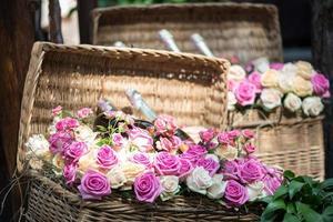Schönheit der Rosen foto