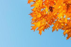Blätter gelb rot