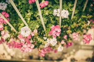 wilde kleine Blume Vintage foto