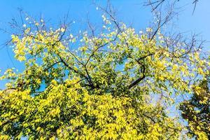 Herbstfarben auf Bäumen