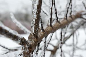 gefrorene Details nach einem Eissturm in Kanada