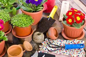 Gartengeräte und Blumen foto
