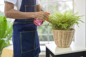 Sprühen von Zimmerpflanzen