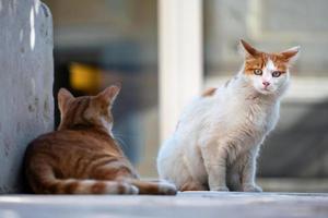zwei Katzen entspannen sich