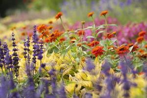 Ich bin Garten foto