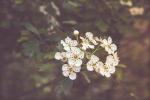 kriechende Blumen