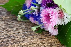 blaue und rosa Kornblumen
