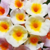 schöne gelbe Blumen schließen Makro