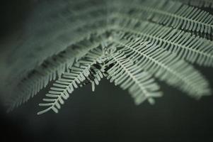 Nahaufnahme von Tannenbaum brach isoliert auf weiß foto