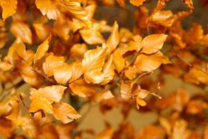trockene Blätter auf einem Ast