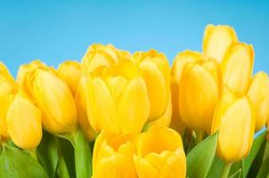 Bündel gelber Tulpen foto