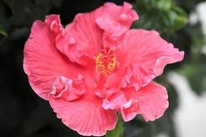 Blume Nahaufnahme 8 foto