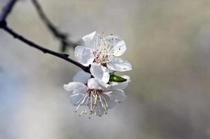 Frühling blühende Blumen Zweig