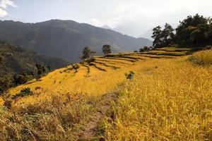 Ansicht des goldenen terrassierten Reisfeldes in Nepal foto