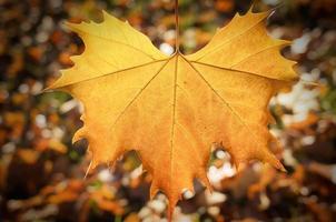 Ahornblatt auf Herbsthintergrund