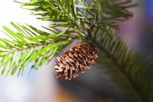 Zapfen auf einem Tannenbaum foto